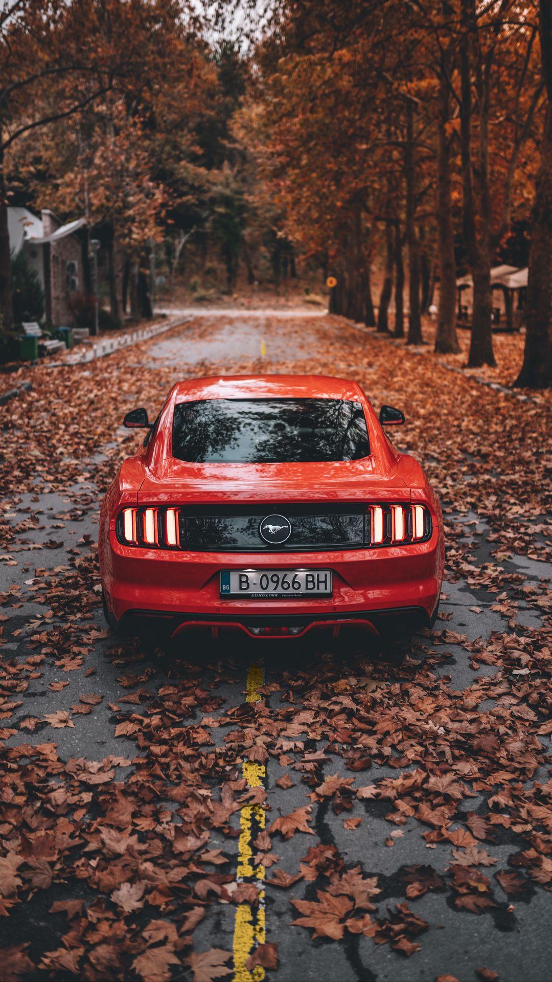 Orange Ford Mustang Car Wallpapers Free Download