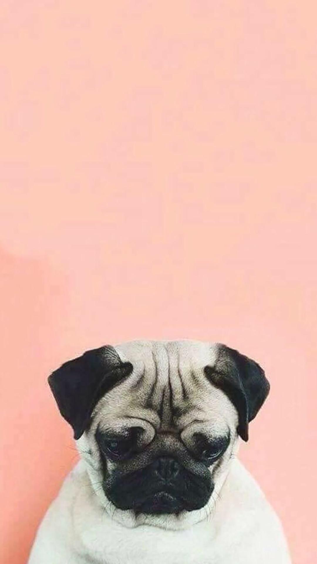 Cute Aesthetic Bulldog Wallpapers Download